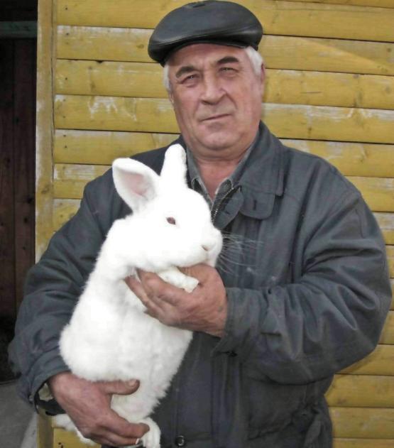 кролики зимой (зимние)